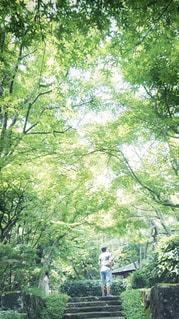 男性,自然,夏,森林,屋外,緑,後ろ姿,樹木,庭園