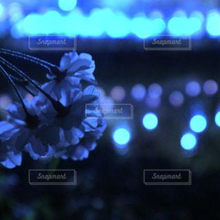 夜桜のアップと玉ボケの写真・画像素材[1983365]
