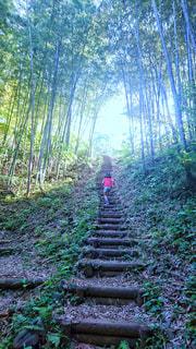 森の中の階段を上る女の子の後ろ姿の写真・画像素材[2147877]