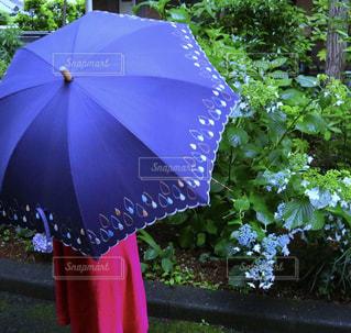 雨,傘,屋外,ピンク,緑,あじさい,青,紫,女の子,小物,紫陽花,雫,梅雨,雨降り,かさ,カサ