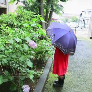 自然,雨,傘,ピンク,緑,ワンピース,あじさい,青,女の子,光,紫陽花,長靴,明るい,天気,レインブーツ,草木