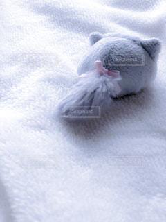 毛布の上の子猫の写真・画像素材[2283758]