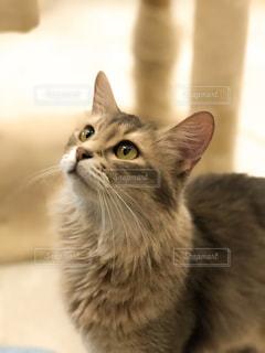 猫のクローズアップの写真・画像素材[2291717]