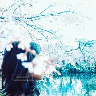 花,桜,屋外,ピンク,女の子,レトロ,ノスタルジー,フィルム,フィルム写真,フィルム風,フィルムフォト