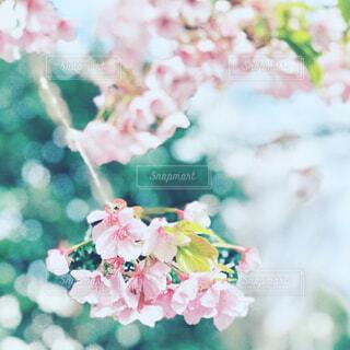 花のクローズアップの写真・画像素材[4295389]