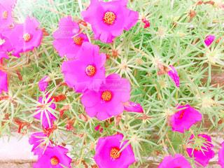 植物にピンクの花の写真・画像素材[1490353]