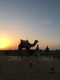 夕焼けの中のラクダの写真・画像素材[1814597]