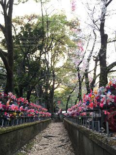 花,屋外,風車,樹木,歩道,整列,地蔵,彩り,ライン