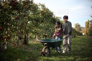 農園でりんご狩りをする兄妹の写真・画像素材[1507001]