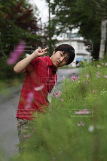 秋桜と少年 in 河口湖の写真・画像素材[1512906]