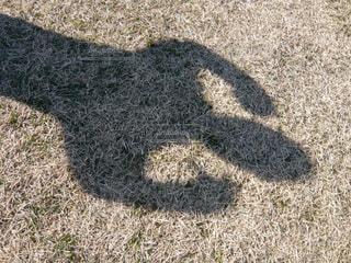 影でガッツポーズの写真・画像素材[1567512]