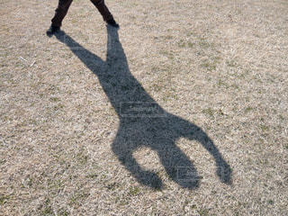 影でガッツポーズの写真・画像素材[1567522]