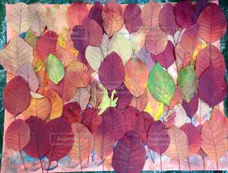 色とりどりの葉っぱのアートの写真・画像素材[1616193]