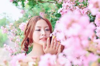 春風の写真・画像素材[1490125]