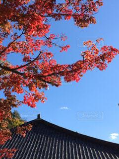 自然,風景,空,花,秋,紅葉,もみじ