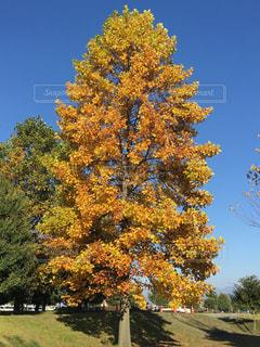 自然,風景,空,秋,紅葉,青空,もみじ