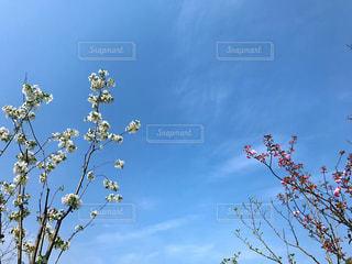 大きな木の写真・画像素材[1503423]