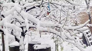 冬,木,雪,白,寒い,積み雪