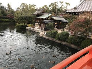 神泉苑の写真・画像素材[1670385]