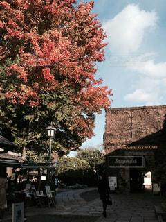 樹木,秋空