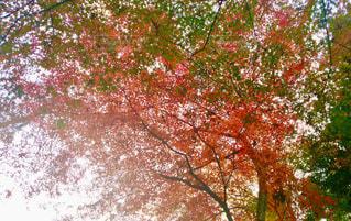 自然,空,秋,紅葉,木,屋外,緑,赤,枝,葉
