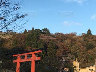 風景,紅葉,屋外,神社,散歩,鳥居,箱根,最高,秋空,レジャー・趣味