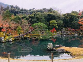 自然,風景,秋,屋外,京都,水面,池,景色,インスタ映え