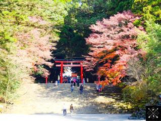 秋,紅葉,鳥居,もみじ,霧島神宮