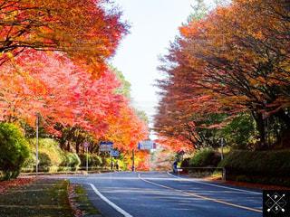 秋,紅葉,もみじ,霧島神宮,紅葉ロード