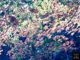 秋,紅葉,もみじ,明治神宮