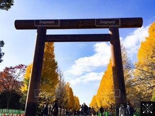 秋,紅葉,もみじ,イチョウ,靖國神社