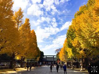 秋,紅葉,イチョウ,靖國神社