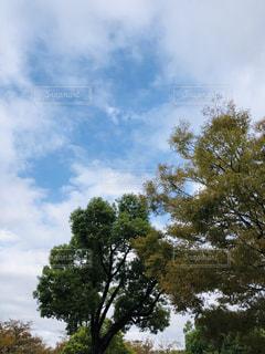 空,秋,青空,散歩,樹木,秋空