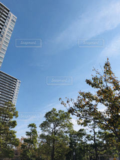 空,秋,雲,青空,散歩,樹木,秋晴れ,秋空