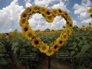 花の写真・画像素材[2144427]