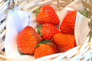 赤,いちご,苺,red,strawberry,sweet,ビュッフェ,fruits