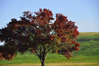 自然,公園,秋,木,草原,散歩,景色,秋空