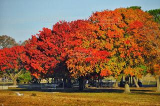 自然,風景,空,秋,紅葉,木,屋外,散歩,草,樹木,秋空