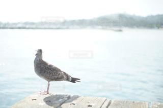 水の体の横に鳥立っての写真・画像素材[1003943]