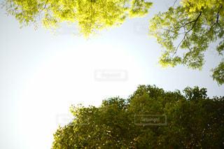 近くの木のアップの写真・画像素材[1100770]