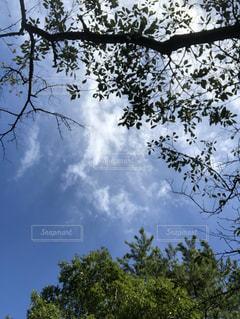 空,木,雲,綺麗,葉っぱ,散歩,景色,樹木,散歩道,秋空