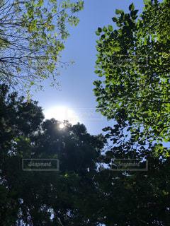 風景,秋,森林,屋外,太陽,樹木,外,逆光,秋空,景観,日中