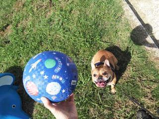 大好きなボール遊び!の写真・画像素材[2737170]