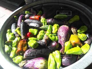 夏野菜の水浴びの写真・画像素材[3675931]