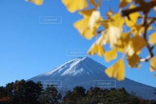 風景,空,秋,富士山,青空,イチョウ,銀杏,河口湖,秋空