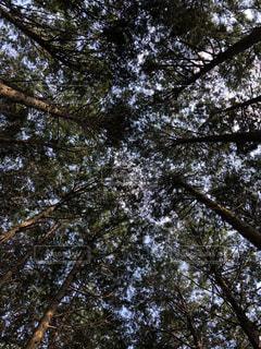 近くの木のアップの写真・画像素材[1567770]
