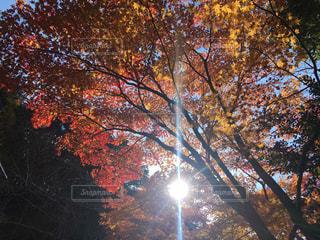 近くの木のアップの写真・画像素材[1599386]