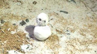 フィールドの上に座っている小さな白い鳥の写真・画像素材[1756967]