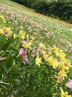 草の上に座って花の花瓶カバー フィールドの写真・画像素材[1885818]
