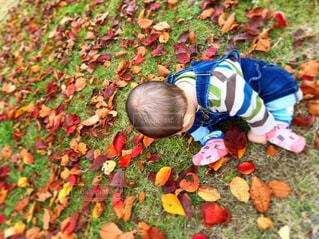 草の中に立っている小さな男の子の写真・画像素材[1611580]